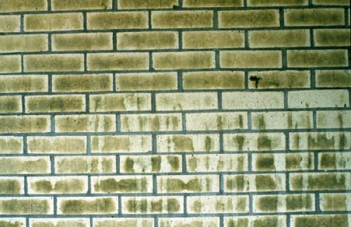 Masonry Cleaning S Most Unwanted Green Journey