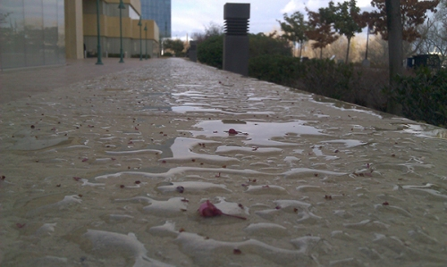 Unable to penetrate, water beads up on limestone treated with Natural Stone Treatment WB Plus at the Ziggurat in Sacramento.  The water, and the crepe myrtle blossoms, fell during a rain storm the previous night. -- Chris Hill photo